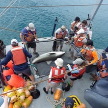 Behind the Scenes with a Shark Tagging Operation
