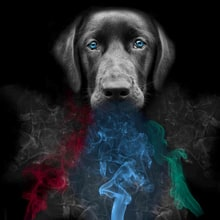 Are 'Vapor Wake' Dogs the Future of Concert Security?