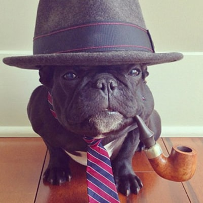 Most Stylish Instagram Pets!