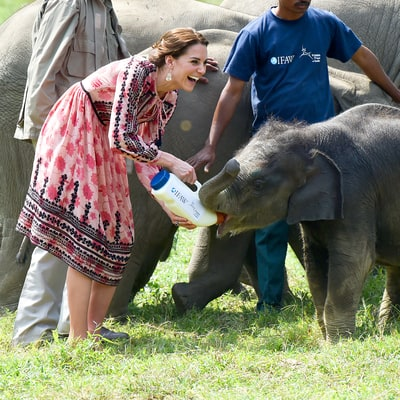 Kate Middleton, Prince William Feed Baby Elephants and Rhinos: Pictures