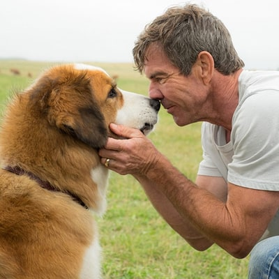 'A Dog's Purpose' Premiere and Press Junket Canceled Amid Video Controversy