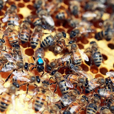Las Vegas Exterminator Dies After Being Stung by Hundreds of Bees