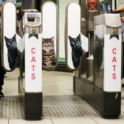 Why This London Tube Station Is Covered With Pictures of Homeless Cats