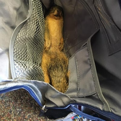 A Third Grader Brought a Dead Squirrel to School for a Hilarious Reason