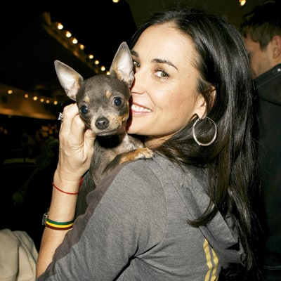 Demi Moore's Chihuahua Gets Acupuncture During Home Visits From Vet: Find Out How Much the Treatments Cost