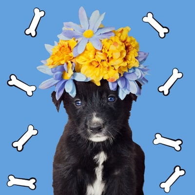 Homeless Puppies Wear Adorable Gowns, Suits, Flower Crowns in Bid for Adoption