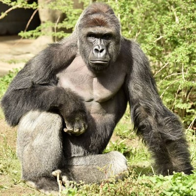 Mom Of Boy Who Fell Into Gorilla Enclosure Defends Herself Against Critics: 'I Keep a Tight Watch on My Kids'