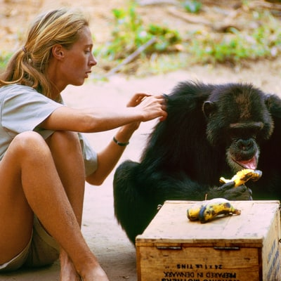 How 'Jane' Captures the Legendary Primatologist – In Her Own Words