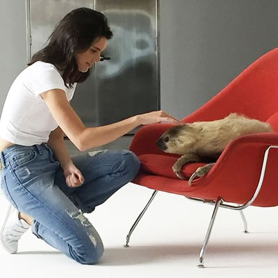 Kendall Jenner Took Selfies With a Sloth on the Set of This Shoot