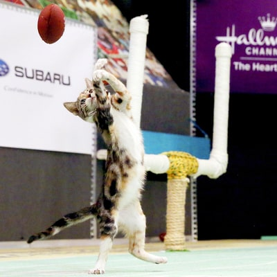Kitten Bowl III Will Be 'Bigger, Better and Even More Exciting': Watch the Felines Play!
