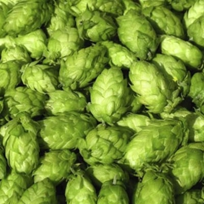 20 Things You Didn't Know About Hops