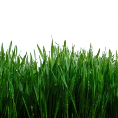4 Steps to a Healthier Lawn