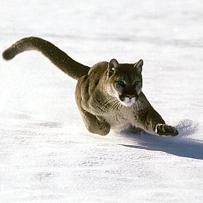 6 Things You Probably Didn't Know About Wild Cats