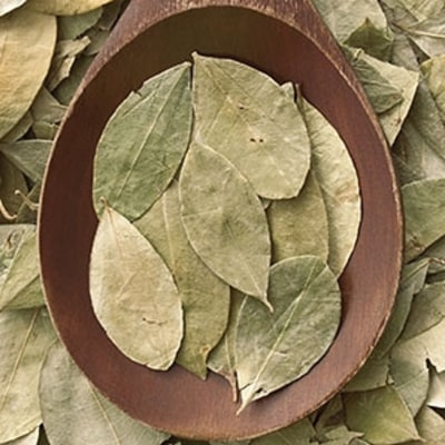 The Coca-Leaf Massage