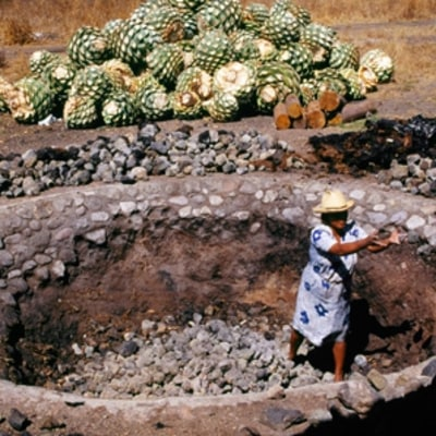 Deep in the Heart of Mezcal Country