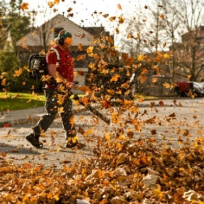 Everything You Need to Take Care of Leaves