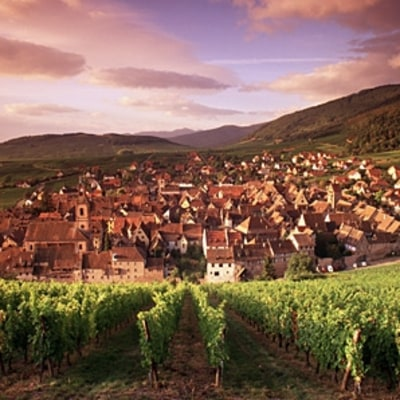 France's Overlooked Alsatian Wines