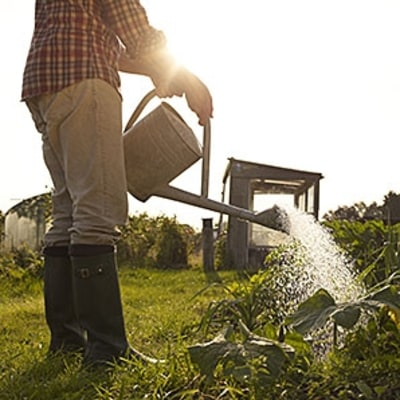 Simple Tips for Gardening in a Drought