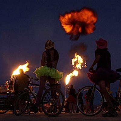 Is the Burning Man Bug Infestation Dangerous?