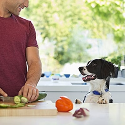 Is It Healthier to Make Your Own Dog Food?
