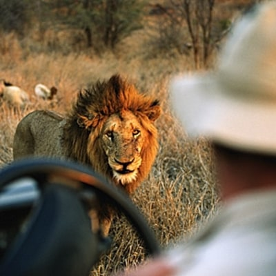 How to Book a Safari