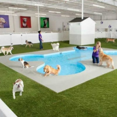 JFK's New Animal Terminal Will Be the Nicest Part of the Airport