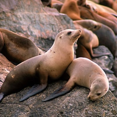 California's Most Diverse Wildlife Tour