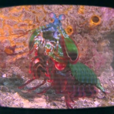 Philippe Cousteau Reveals the Hidden Superpowers of a Shrimp