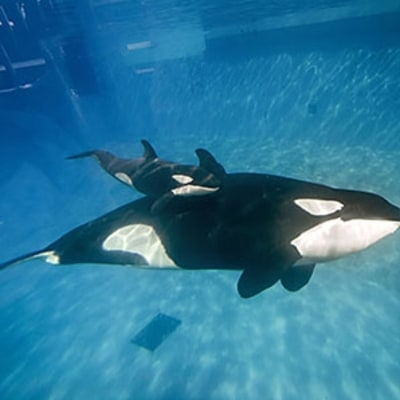 SeaWorld's Continued Struggles