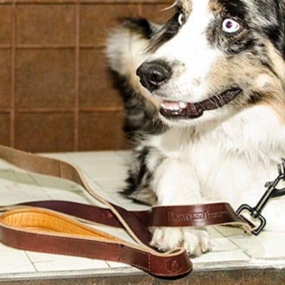 Stylish Dog Collars and Leashes for Men