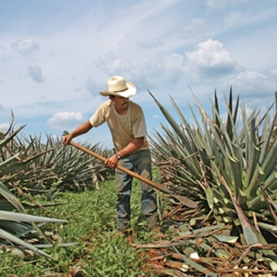 The Hunt for Sublime Tequila