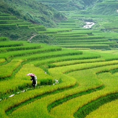 A Hmong's Trek Through Vietnam