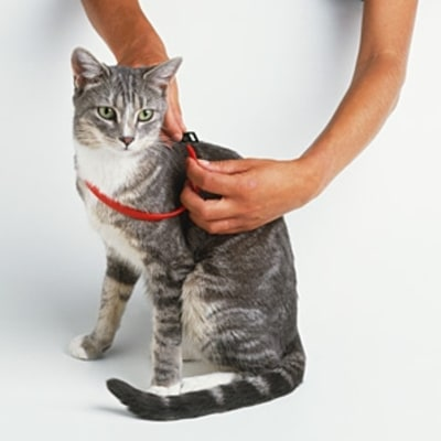 Flea Collars May Be Killing Your Pet
