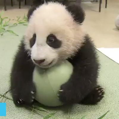 We Found the Cutest Baby Animal Videos Ever — Watch Them All