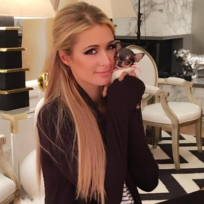 Meet Paris Hilton's Adorable New Teeny-Tiny Teacup Chihuahua Puppy!