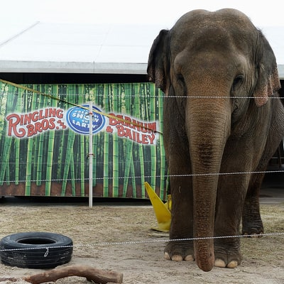 Ringling Bros. and Barnum & Bailey Circus to Close 'Greatest Show on Earth' After 146 Years