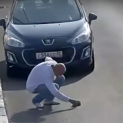 Driver Saves a Kitten From Certain Death on a Highway in Russia: Video