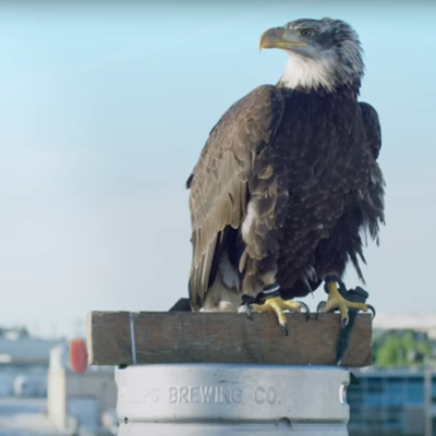Get Your Beer Delivered By a Real Bald Eagle