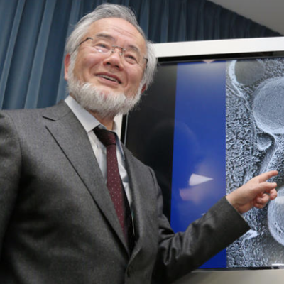 Why Is Dr. Ohsumi's Nobel Prize in Medicine Significant?