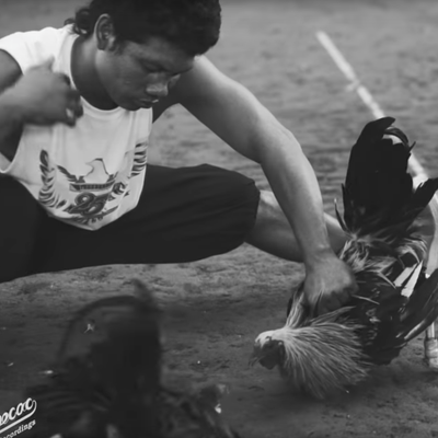 Dead Cross Take Brutal Look at Cockfighting in 'Obedience School' Video