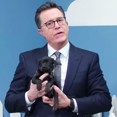 Stephen Colbert, Aubrey Plaza Put Humor to Good Use in 'Rescue Dog Rescue' Puppy Adoption Segment
